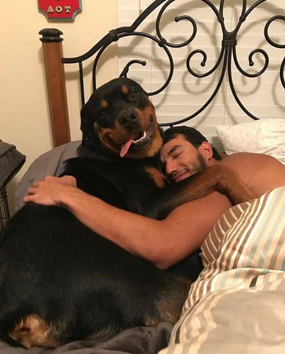 Take A Moment To Appreciate How Loving Dogs Really Are