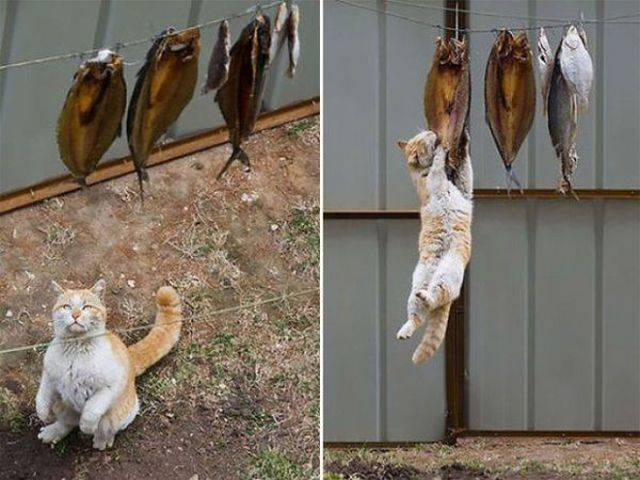 Cat Are Not Very Good At Stealing