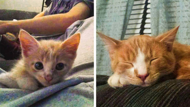 How A Life Of An Animal Can Change With A Newly Found Home