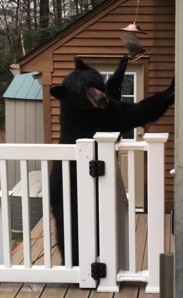 Animals Refuse To Stop Having Fun!