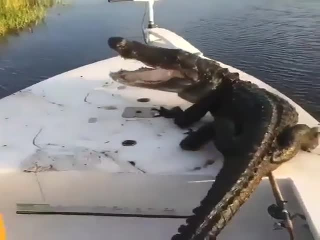 Alligator Just Wanted To Be Friends With Them