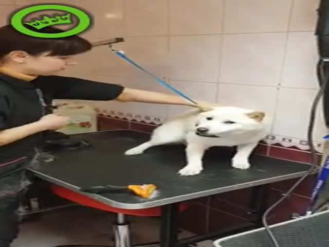 Giving A Dog A Haircut Is This Easy