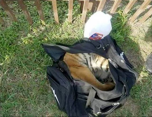 Sometimes Illegal Immigrants Try To Smuggle Ridiculous Things…