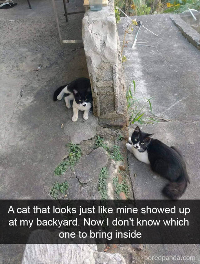 Snapchat Should Be Catchat Already