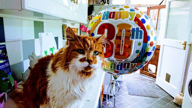 Meet The Cat Who's Currently The Oldest On Earth – Rubble