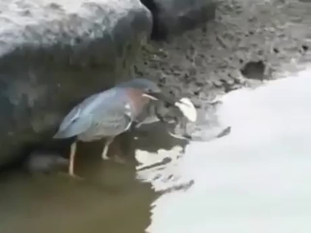 This Bird Knows Some Fishing Secrets