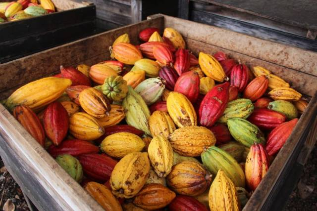 An Amazing Process Of Making Chocolate From Start To Finish!