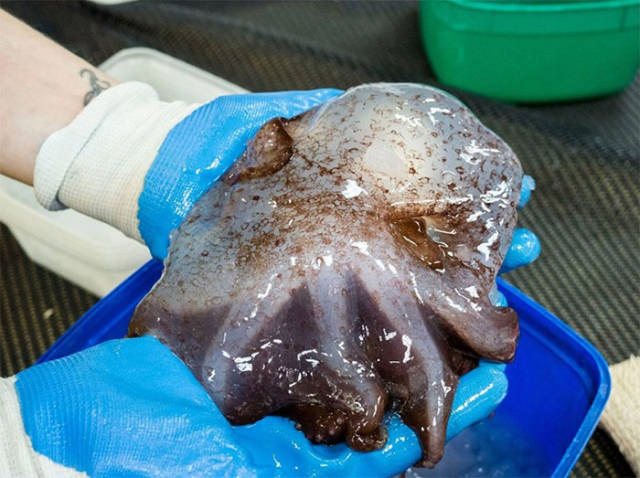 Deep Sea Still Hides Many Surprising Species