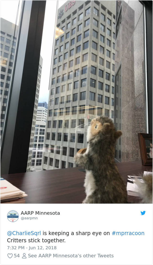 This Skyscraper-Climbing Raccoon Has Just Become An Internet Hero