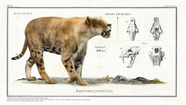 Giant Animals Which Became Extinct Long Ago