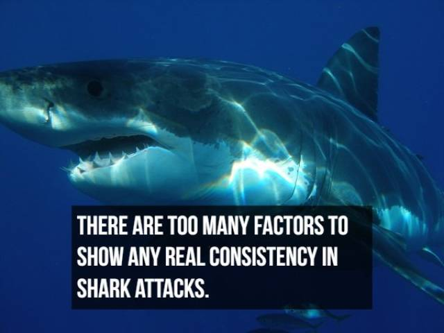 Shark Attack Facts That Hurt