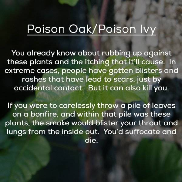 Even Plants Try To Kills Us!