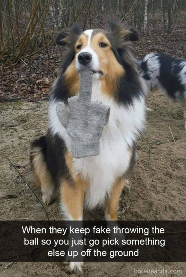 Dogs Know What Humans Like In Their Snapchat!
