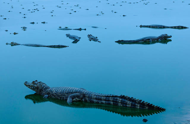 Nature Conservancy Photo Contest 2018 Brought Us Some Masterpieces