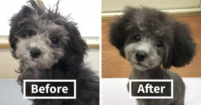 This Groomer Transforms Dogs Into Real Dog Celebrities!