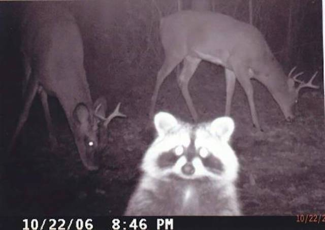 Trail Cams Have Seen Literally Everything