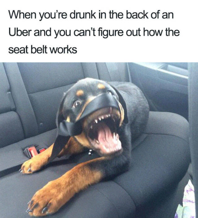 Uber Rides Can Only Be Described With Animal Memes!