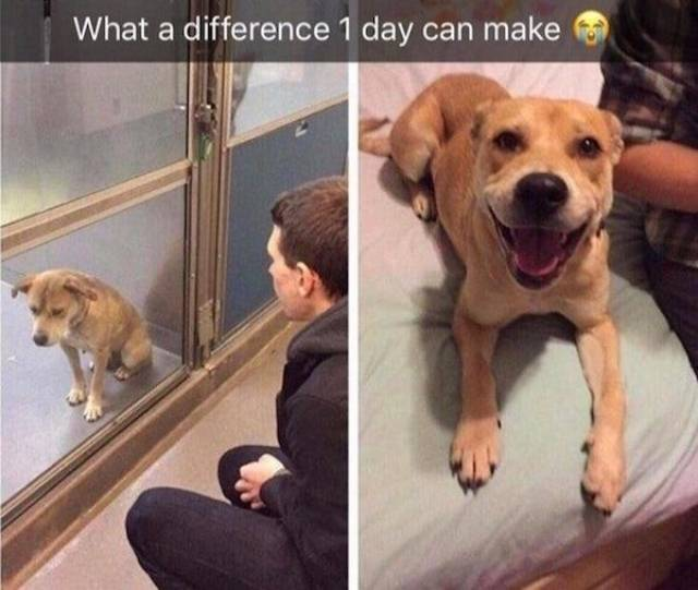 Adoption Means The World To Dogs