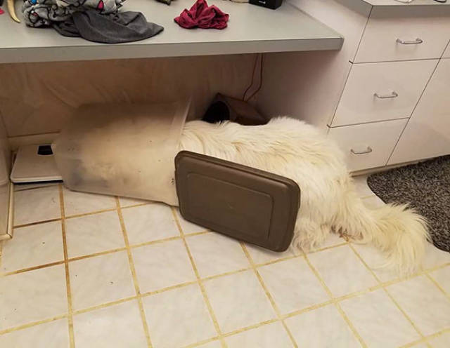 Dogs Are Not The Brightest Of Animals…