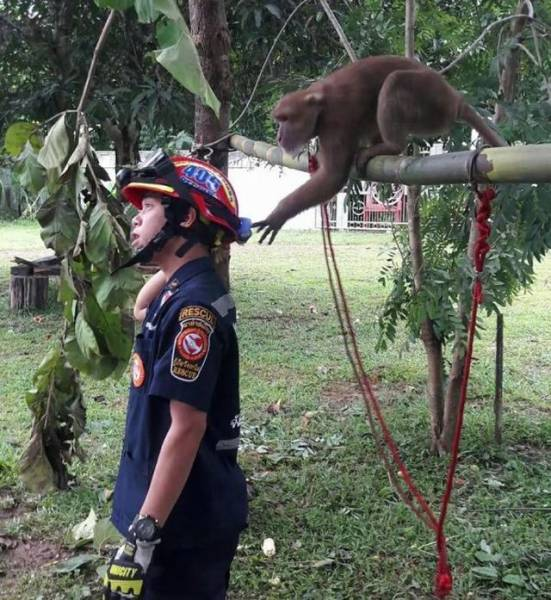 This Monkey Absolutely Loves Being Rescued