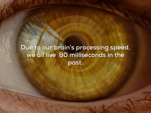 Facts That Your Brain Surely Needed
