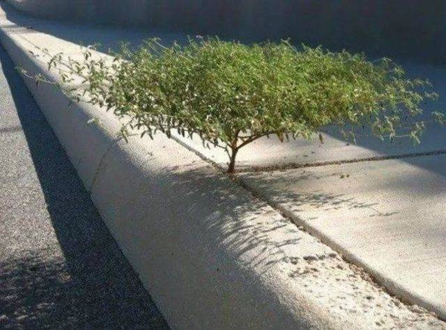 Trees Don't Care About Anyone Or Anything