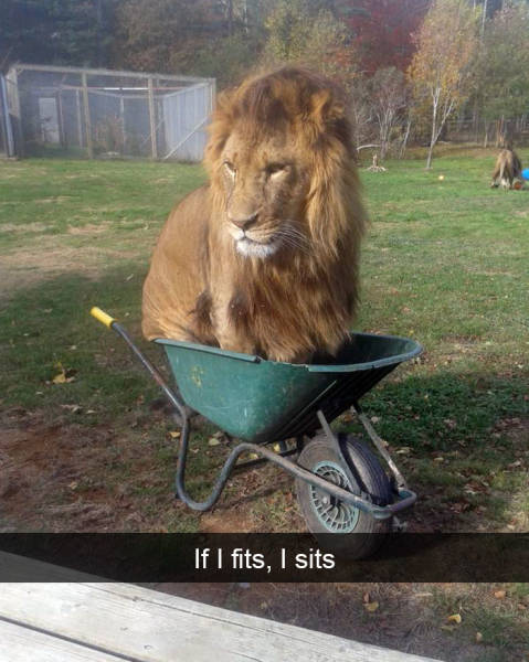 Animals Should Have Their Own Snapchats!