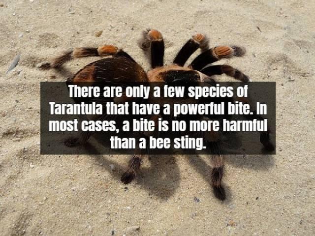Terrifying Facts About Tarantula