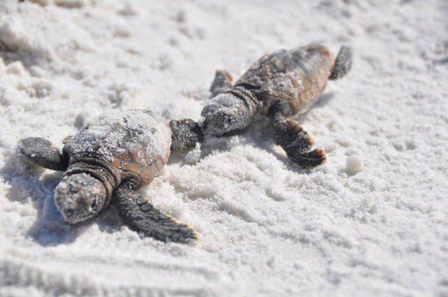 Sea Turtles Are Coming Back To Their Nesting Sites After Those Have Been Cleaned Of Trash, And It Really Looks Like We Can Save Our World