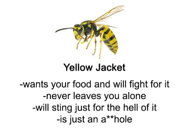 """A Comprehensive Guide to Yellow Stripey Things"" Is What You Definitely Need To Know"