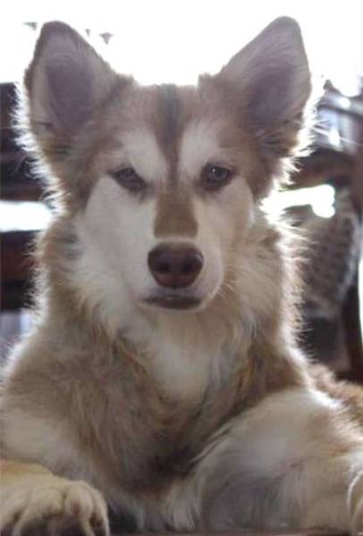 Rescued Huskies Transformed Completely!