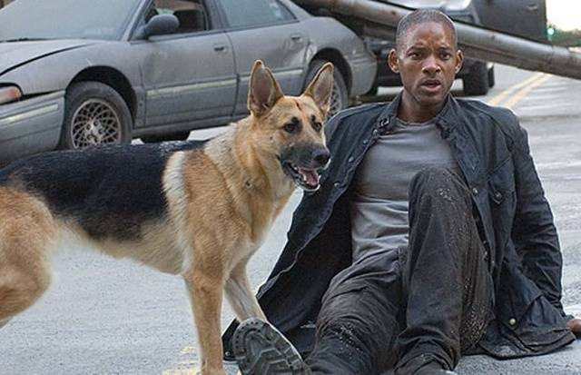 "Abbey The Dog From ""I Am Legend"" Is Still Alive And Kicking!"