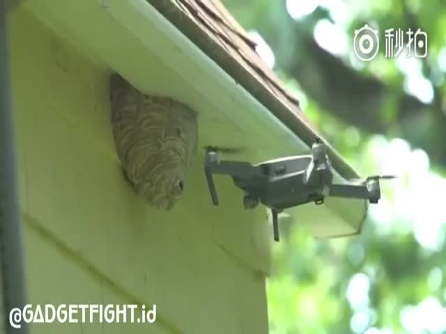Wasps Fighting A Drone Is Some Real Material For Action Movies
