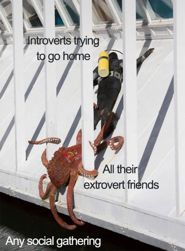 Introvert Memes That Are Only For Insiders