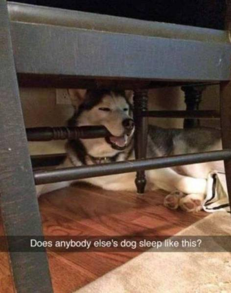 Hilarious Photos That Prove Huskies Are The Mysterious Dogs