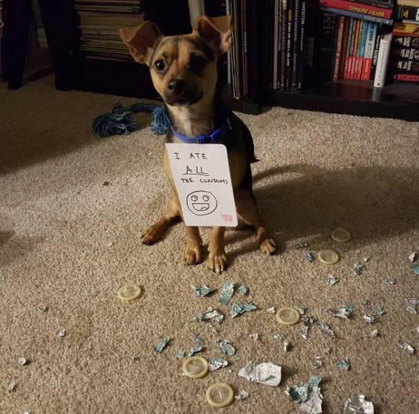 These Pets Are Trueborn Criminals