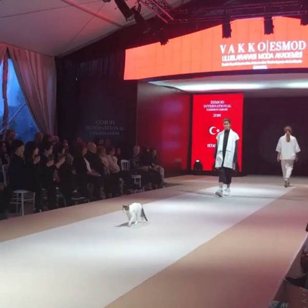 Cats Take Back What Rightfully Belongs To Them – Catwalk