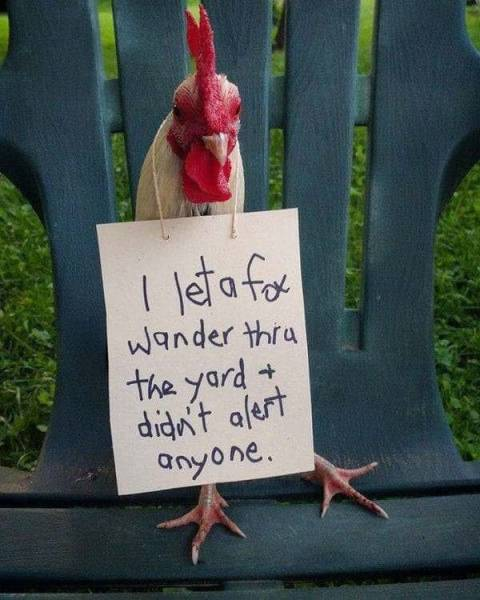 Chickenshaming Is Getting Real!