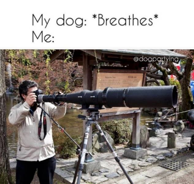 Dog Memes, Why Did It Have To Be Dog Memes
