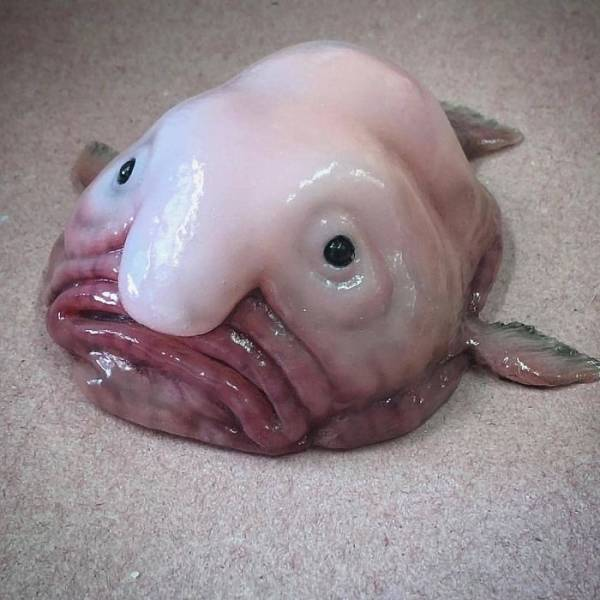 We Know Nothing About Deep Sea Creatures