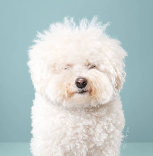 How Japanese Grooming Transforms Dogs
