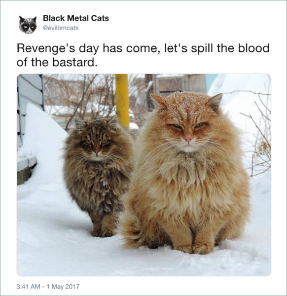 These Cats Are Far More Metal Than You