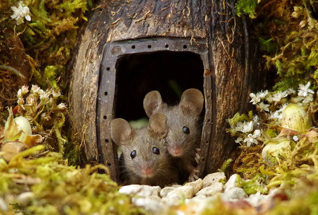 Photographer Builds A House For A Family Of Mice He Found In His Garden