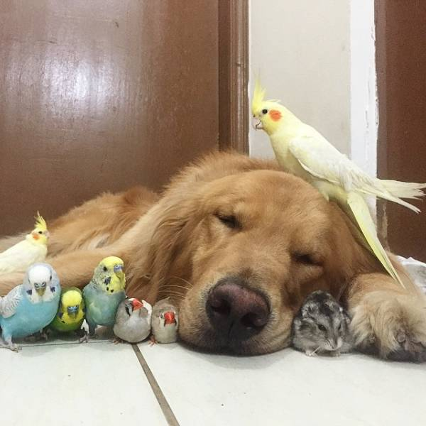 Animals Don't Really Care Who To Be Friends With