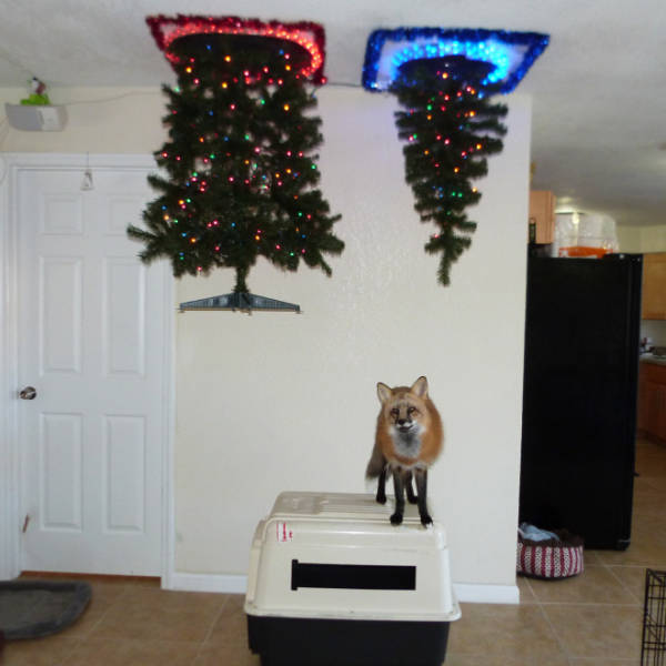 Pets Will Never Hurt Those Christmas Trees