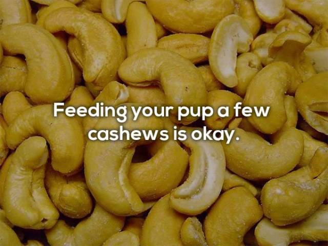 Here's Which Human Foods Can Dogs Safely Eat