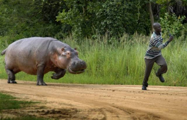 Humans Aren't That Big Compared To These Animals (31 pics ...