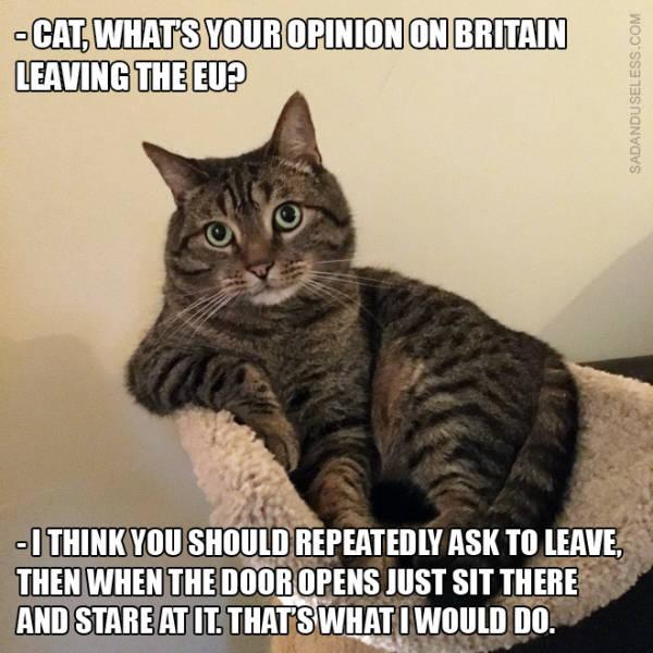 Exit The Brexit Memes