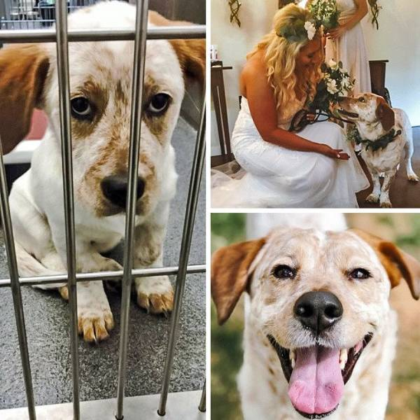 Animals Who Are Not Abandoned Anymore
