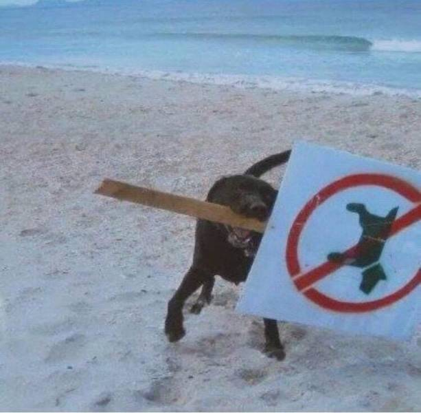 Animals That Play Against The Rules